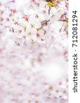 a beautiful cherry tree   Shutterstock . vector #712081294
