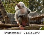 baboons | Shutterstock . vector #712162390