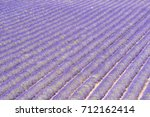 detail of a beautiful lavender... | Shutterstock . vector #712162414