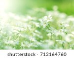 little white flowers . white... | Shutterstock . vector #712164760