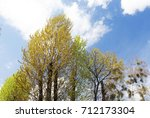 birches  maples and other... | Shutterstock . vector #712173304