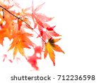 Beautiful Maple Leaves In The...