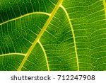 art background of venation and... | Shutterstock . vector #712247908