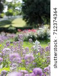 Small photo of Purple flowers. Alyssum maritimum or lobularia marine. Garden plant. A park. Flower background. Seasons cards. Images for calendar