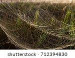 beautiful spider web in dew...   Shutterstock . vector #712394830