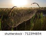 beautiful spider web in dew...   Shutterstock . vector #712394854