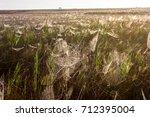 beautiful spider web in dew...   Shutterstock . vector #712395004