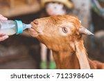Human Bottle Feeding Milk A Goat