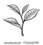 vector tea leaves. drawn herbal ... | Shutterstock .eps vector #712410199