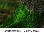 Detail Moss On The Tree On...