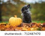 Little Black Rabbit With...