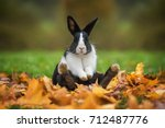 Stock photo little funny rabbit sitting in leaves in autumn 712487776
