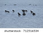 landscapes of birds and marshes ... | Shutterstock . vector #712516534