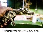 Small photo of baby Nile crocodile