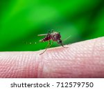 Small photo of Malaria, Yellow Fever or Zika Virus Infected Mosquito Sting on Green Background