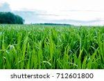 field  nature. rural... | Shutterstock . vector #712601800