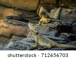 lizards  | Shutterstock . vector #712656703
