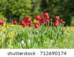 spring landscape with flowers.... | Shutterstock . vector #712690174