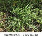 weed in garden | Shutterstock . vector #712716013