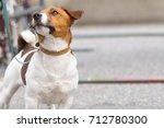 jack russell terrier | Shutterstock . vector #712780300