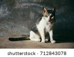Small photo of Cat Stare staring eyes looking at the camera villain crafty Sit still on a dark background Soft light vintage style