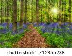 famous forest hallerbos in... | Shutterstock . vector #712855288