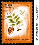Small photo of MOSCOW, RUSSIA - AUGUST 29, 2017: A stamp printed in shows Swietenia mahagoni, Afforestation serie, circa 1975