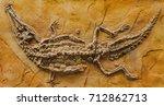 detailed crocodile fossil...   Shutterstock . vector #712862713