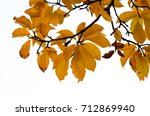 branch with autumn leaves... | Shutterstock . vector #712869940