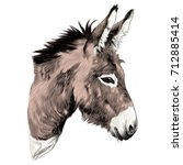 donkey sketch vector graphics