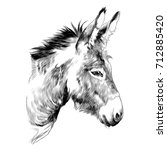 donkey sketch vector graphics a