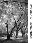 Small photo of Public Park in bangkok,thailand take a picture with modify camera in infrared black and white style.