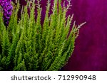 lupinus  lupin  lupine field... | Shutterstock . vector #712990948