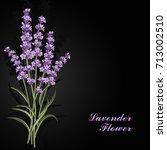 Stock vector beautiful lavender flowers on black background vector illustration 713002510