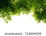 green leaf on the branches... | Shutterstock . vector #713034520
