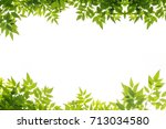 green leaf frame isolate on... | Shutterstock . vector #713034580