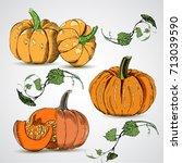 different varieties of pumpkins