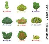 different garden berry shrubs... | Shutterstock .eps vector #713057656