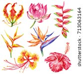 watercolor style set of exotic... | Shutterstock .eps vector #713063164