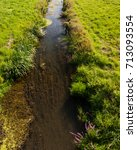 Small photo of Beautiful river biotope is the living space for many organisms