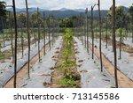 zucchini farm   Shutterstock . vector #713145586
