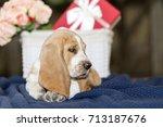 sweet and gentle puppy basset... | Shutterstock . vector #713187676