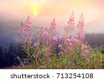 the gentle light of a foggy... | Shutterstock . vector #713254108