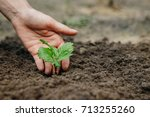 women's hands put a sprout in... | Shutterstock . vector #713255260