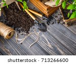 seedlings tomato in pot with... | Shutterstock . vector #713266600