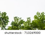isolated leaf background | Shutterstock . vector #713269000