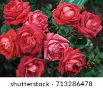 Stock photo rose backgrounds for valentine day or another celebration selective focus 713286478