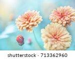 nature macro closeup flowers in ... | Shutterstock . vector #713362960