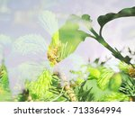 the background from the young... | Shutterstock . vector #713364994