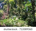 Dense Costarican Jungle  ...